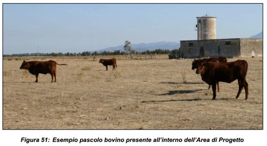FM_fig51_pascolo-bovino