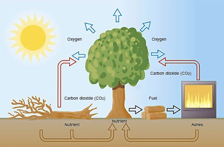 The_Carbon_Cycle_std